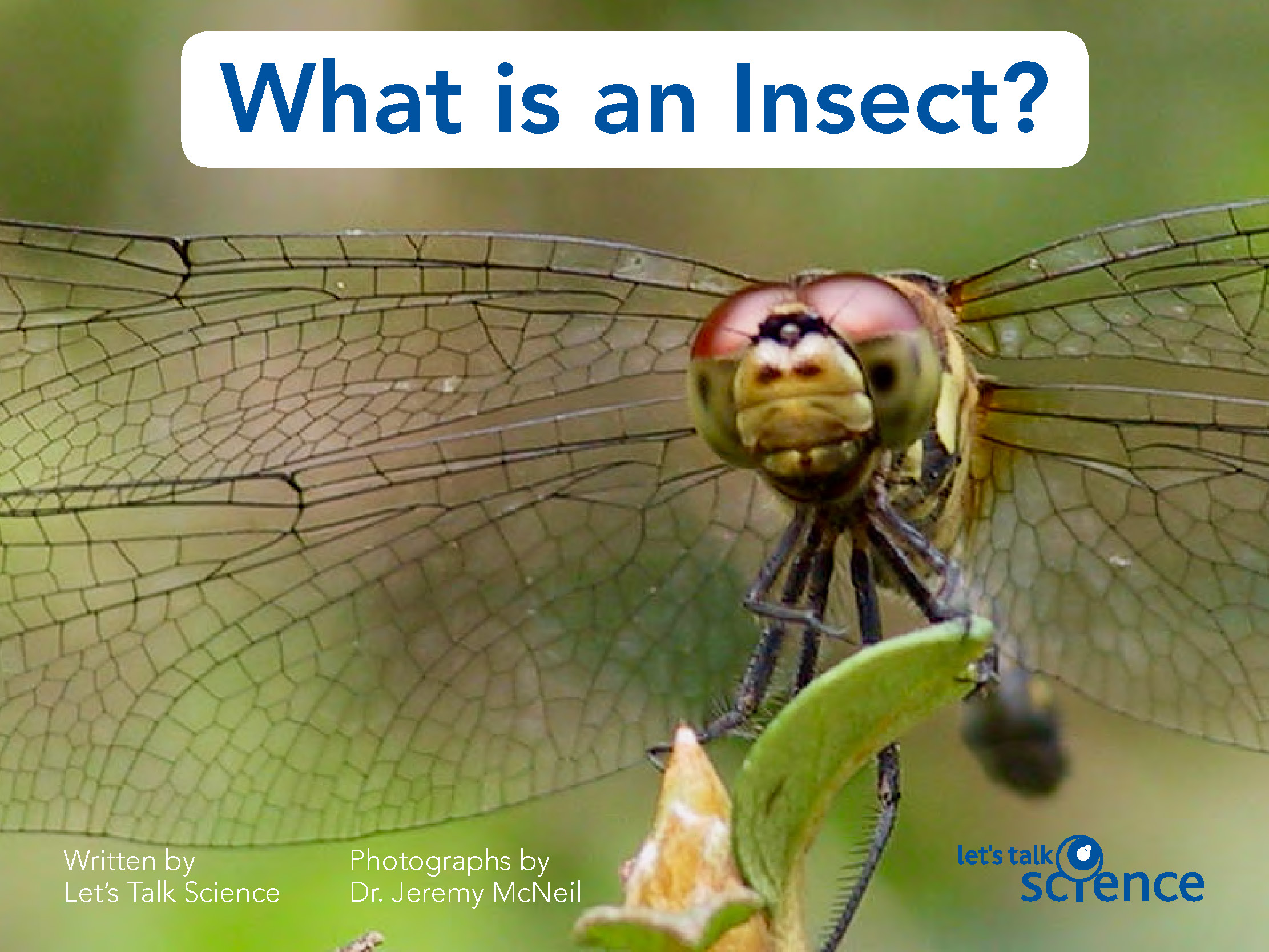 What is an insect, cover image