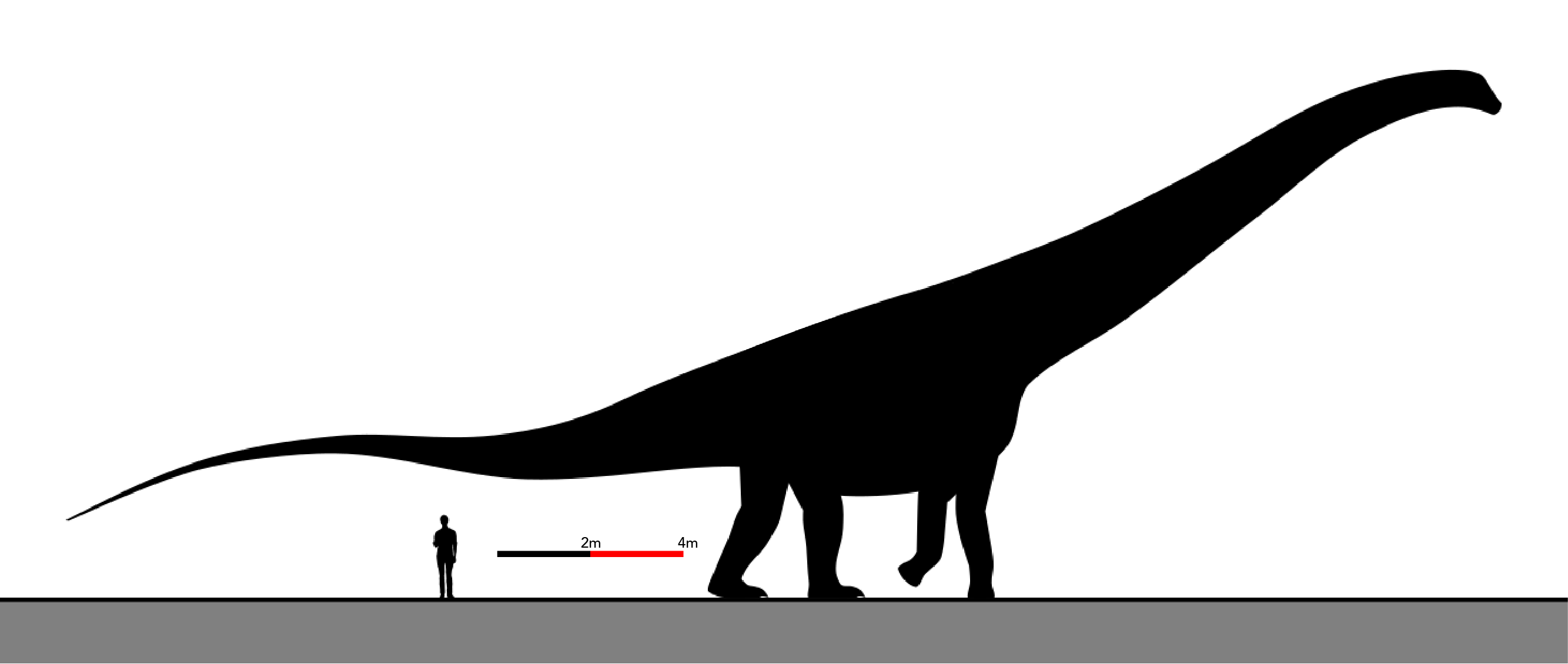 Graphic showing the relative sizes of Argentinosaurus huinculensis and a human