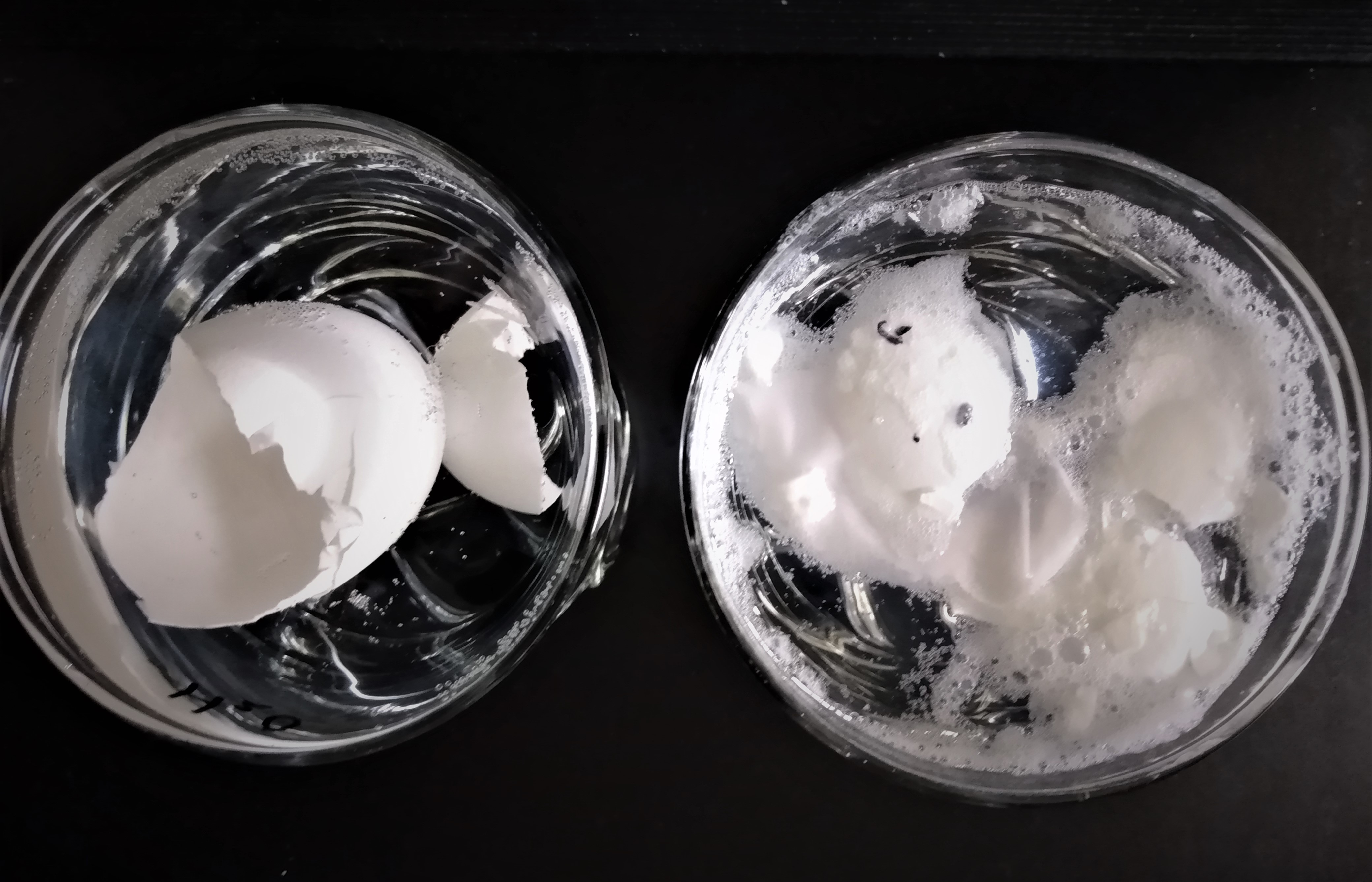 Egg shells in water on the left and in vinegar on the right after 24 hours