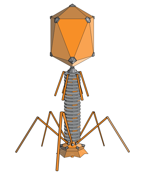 Image of a bacteriophage