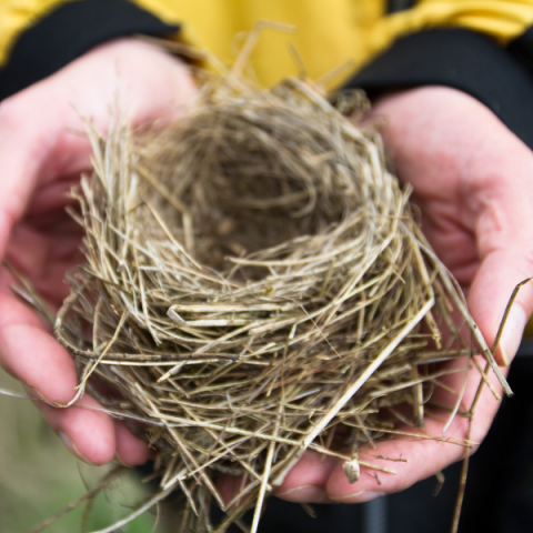 Hands holding bird's nest