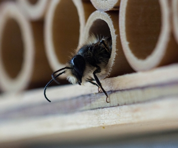 Bee exiting a bee house