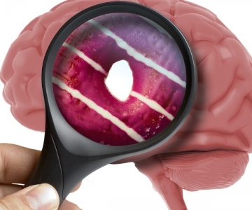 Looking at a donut and a brain through a magnifying glass