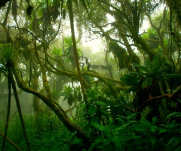 Dense tropical rainforest