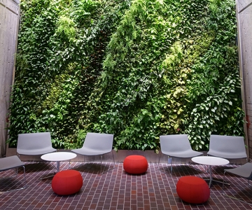 Green walls in Harvard University