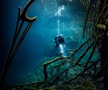 Diver with branches