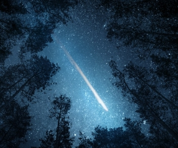 Meteor seen through an opening in the trees