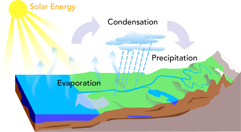 The main processes of the water cycle are evaporation, condensation and precipitation