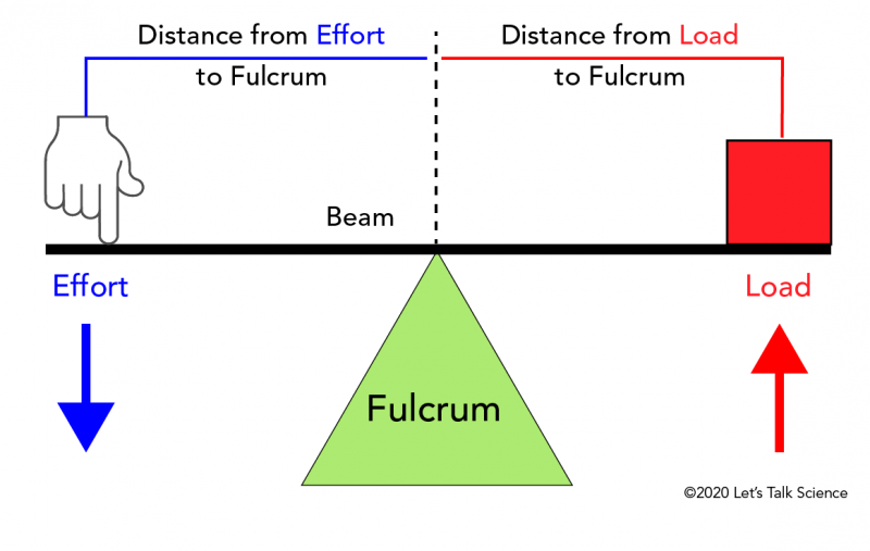 Basic parts of a lever showing the locations of the beam, fulcrum, effort and load