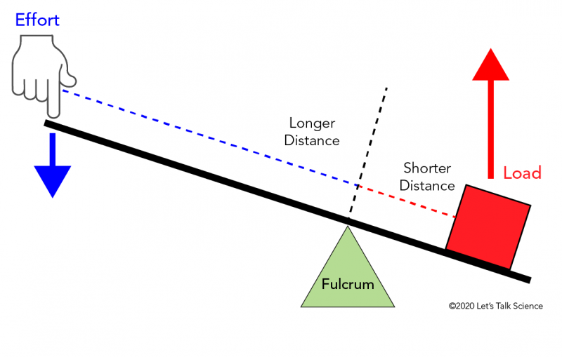 In a first class lever, the fulcrum is located between the load and the effort