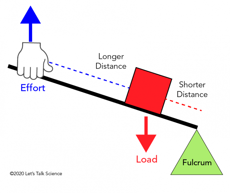 In a second class lever, the load is located between the effort and the fulcrum.
