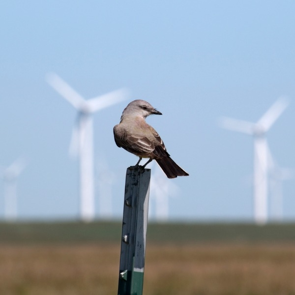 Bird near a wind farm