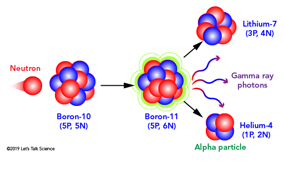 When Boron-10 captures a neutron, it decays to form Lithium-7, gamma ray photons and an alpha particle