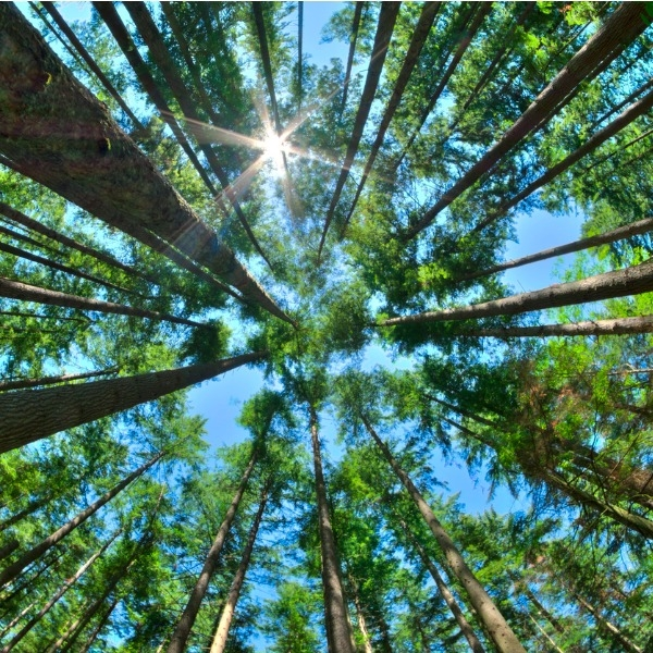 Looking up in a forest