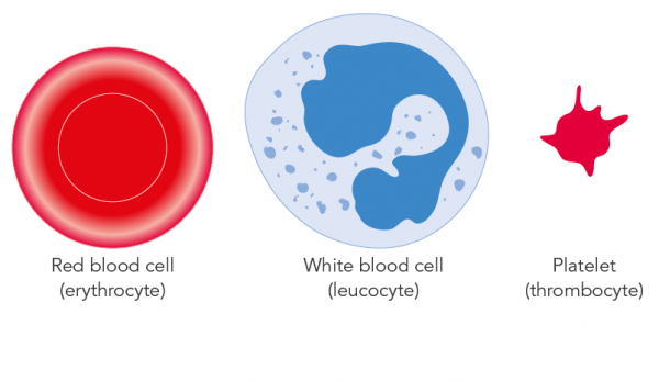 Illustration of blood components (red blood cells, white blood cells and platelets)