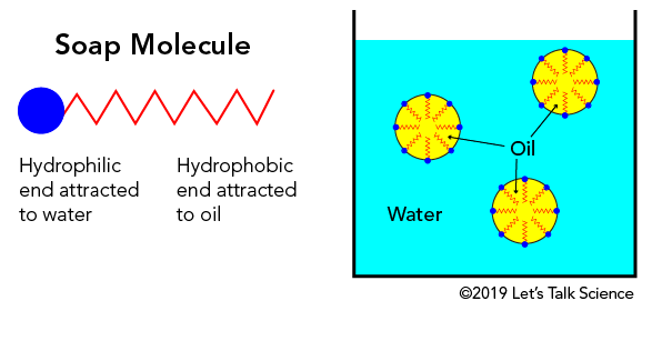 Soap molecules in water
