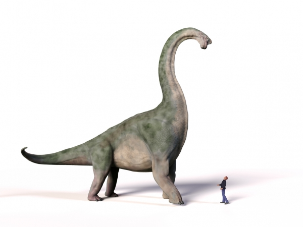 Comparison of a brachiosaurus and a person