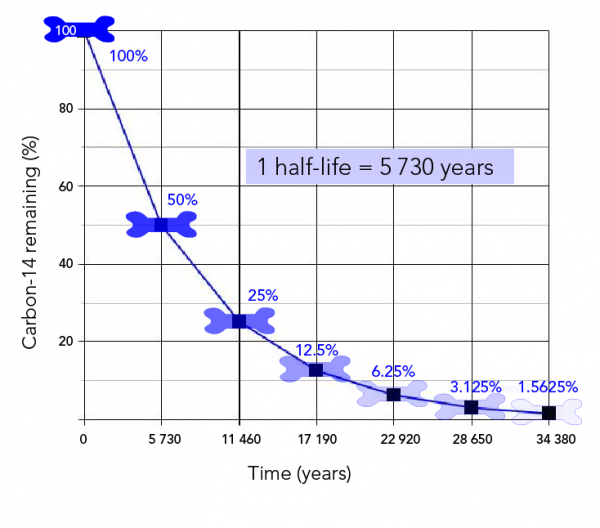 The percentage of carbon-14 in bone decreases by half with each half-life of 5 730 years