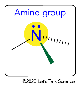 Structure of an amine group