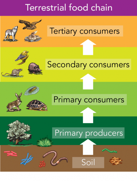 Terrestrial food chains including soil