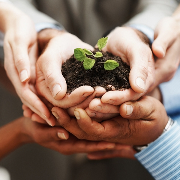 Hands holding soil and a small plant
